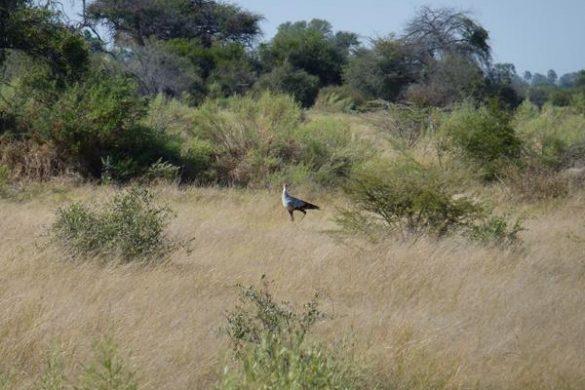 Beeindruckende Artenvielfalt im Chitabe Camp im Okavango Delta. Mehr Informationen unter www.wiraufreise.de