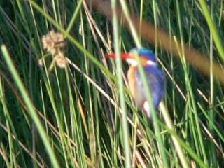 Das Xigera Camp im Moremi Wildlife Reserve. Mehr Informationen unter www.wiraufreise.de