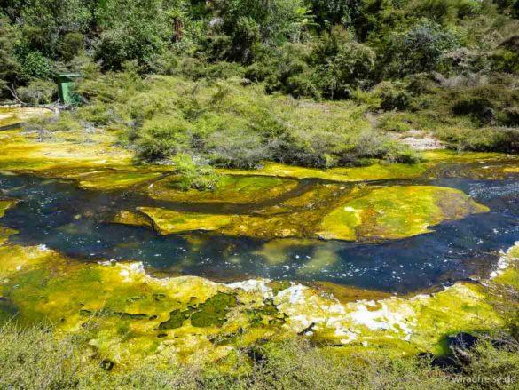 Kochender Fluss im Waimangu Vulkan-Valley bei Rotorua, zu sehen sind brodelndes Wasser und grüngelbe, hitzeresistente Algen