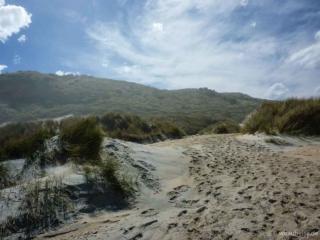 Sandfly Beach Sandfly Bay Otago Peninsula Portobello Neuseeland