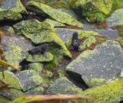 Baby-Pelzrobben in der Tauranga Bay in Neuseeland
