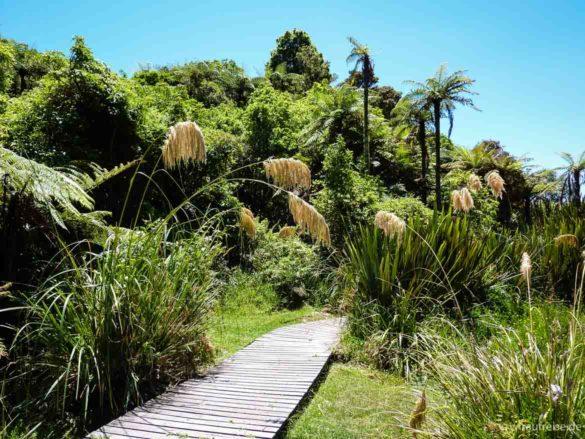 Idyllisches Plätzchen am Tarawera-See, Holzsteg durch ein Stückchen Urwald, bei Rotorua in Neuseeland