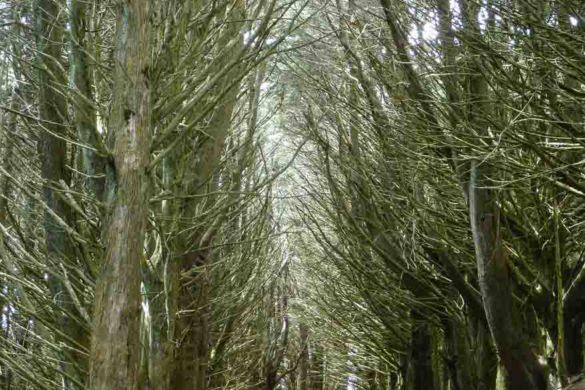 Kahlgefegte Bäume am Sandy Mount in neuseeland otago peninsula