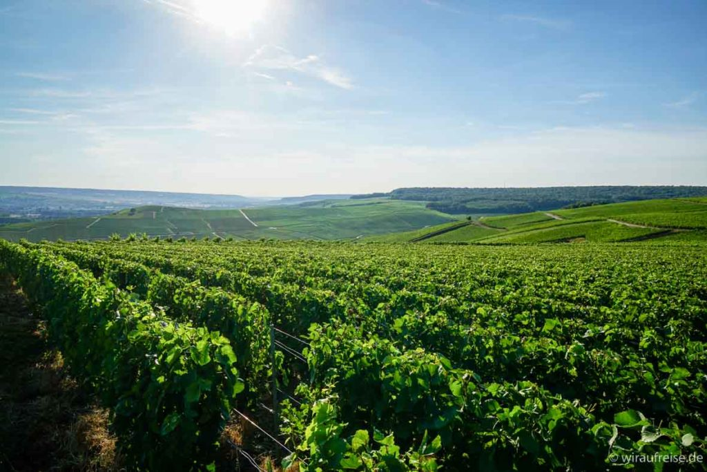 Weinpflanzen, Champagnerhügel, Hautvillers in der Champagne