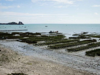 Austernbänke vor Cancale