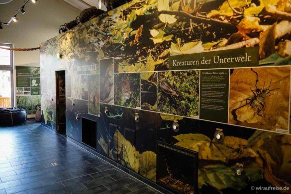 Interaktive Erlebnistafeln im Nationalparkzentrum Hainich
