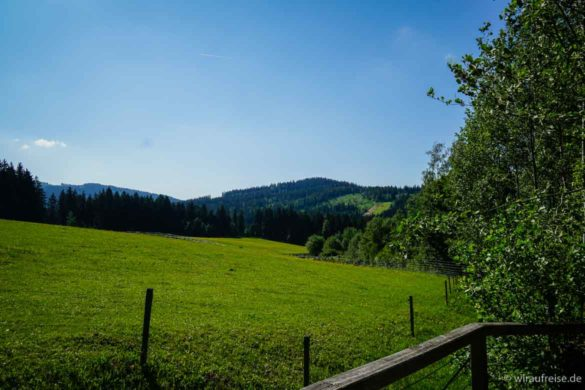 Freifläche der Auerochsen und Wildpferde beim Nationalparkzentrum Falkenstein