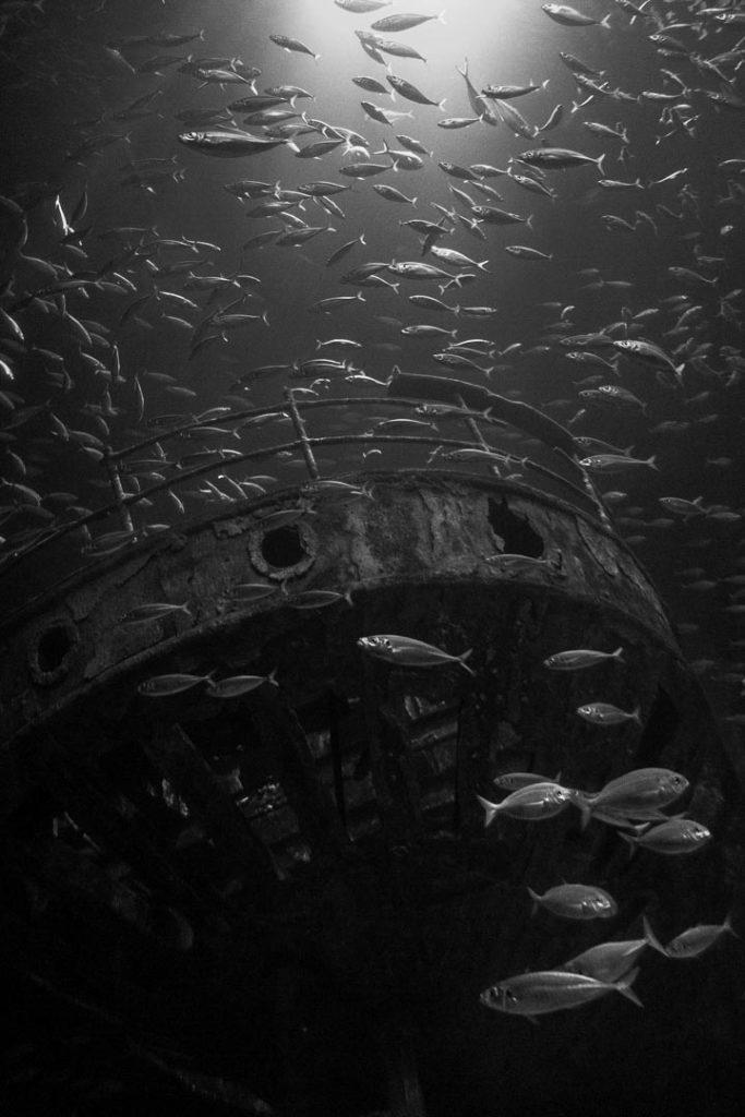 Ein Schiffswrack unter Wasser mit Fischen in schwarz/weiß