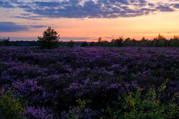 Sonnenuntergang in der Lüneburger Heide