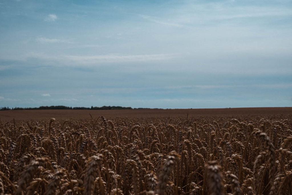 Unendliche Weiten in MVP oder Weizenfelder bis zum Horizont